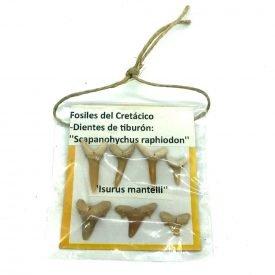 Collection 7 Teeth Tiburon - Blister 7x7 xm