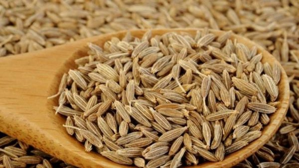 Cumin in Grain - Oriental spices selection - Ruca